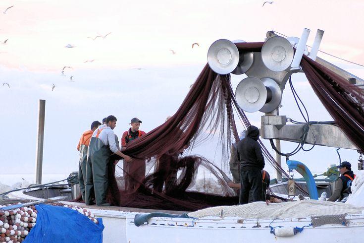 Εργάτες αλιευτικού στην Καλαμαριά (Δεκέμβριος 2017)