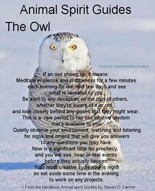 Owl spirit guide - a snowy owl landed on the road right in front of my car and stared and my mother and me!