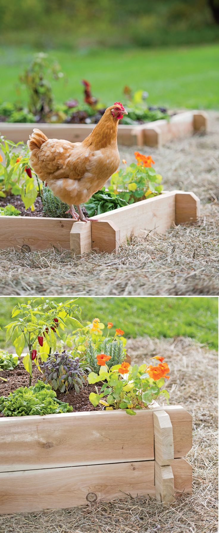 78 Best Images About Raised Beds Elevated Gardens On Pinterest Gardens Garden Planner And