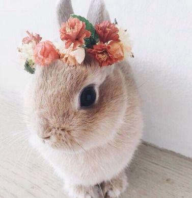 A beautiful flower wreath for a beautiful bunny – Fressnapf feiern
