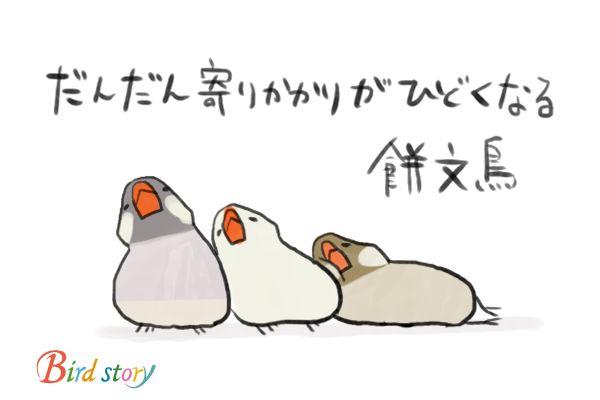 Twitter / Birdstory_pic: ことりカフェ表参道店とバードモア南青山店にて、文鳥イベントが ...