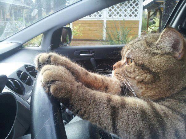 come trasportare il gatto in auto