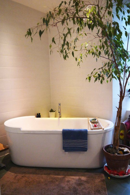 Best plants for the bathroom for Best plants for bathrooms