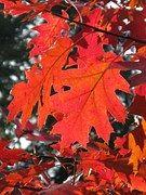 Blatt, Herbst, Laub, Wald