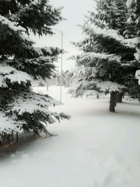 winter wonderland Edmonton Alberta