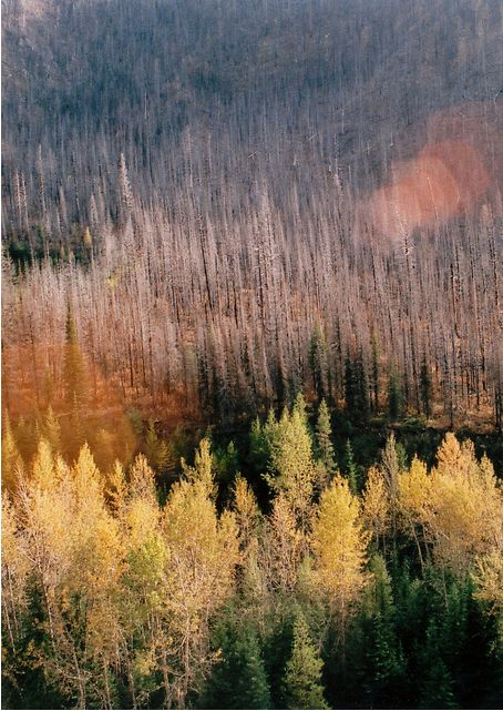 Near Seeley Lake, Montana  The aftermath of a fire in 2007.  By Jocelyn Catterson and Jeremy Daigneault. I was there and remember this fire