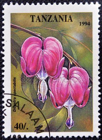 Скачать - Марку, напечатанную в Танзании, посвященный тропические цветы, показывает Дицентра spectabilis — стоковое изображение #14697073