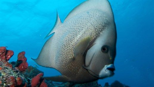 Insulted fish - Mexico - underwater - KILROY