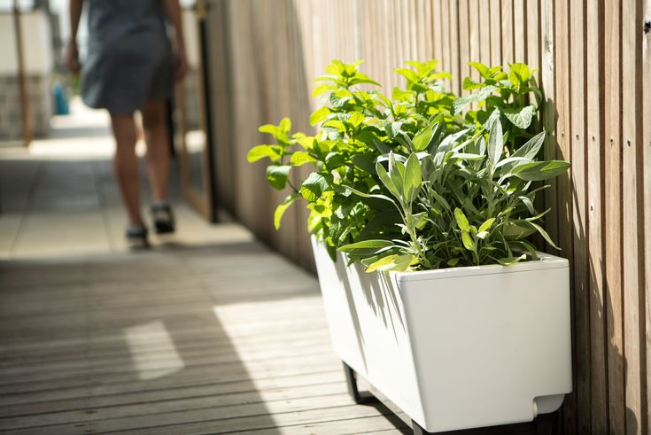 Happy St. Patrick's Day! How about marking the day by growing something green, instead of just wearing it? Get all your gear via the link in our bio. #Glowpear #gardening #urbangarden #patiogarden #smallgarden #smallbalcony #balconyplants #balconygardening #selfwateringplanter