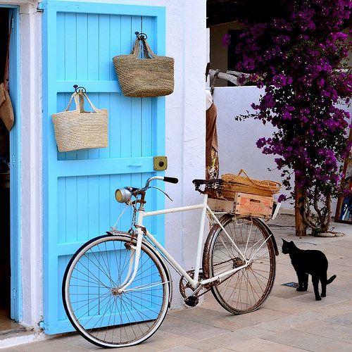 Cat and bike