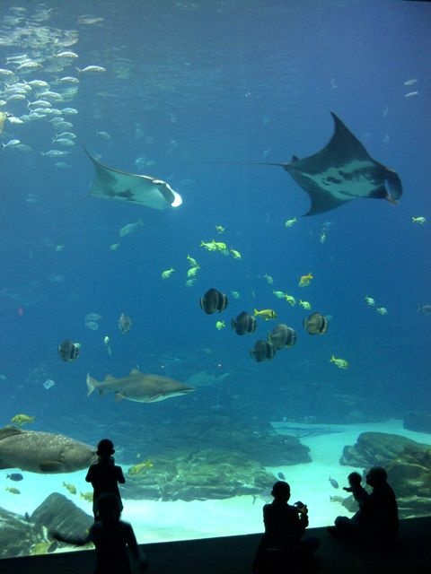 142 best images about sweet sweet georgia on pinterest for Stingray fish tank