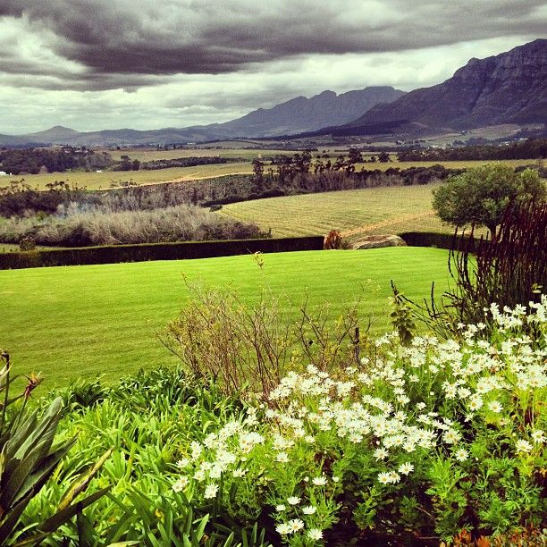 Just a beautiful shot. South African Wine Country - Ernie Els Winery. Thanks @Martha Bullard-White for letting me share these.