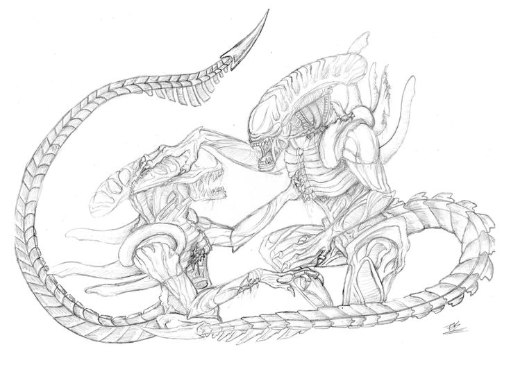 Xenomorph Chestburster Drawing 1264 best images about...