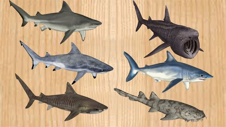 Learn Shark Names Sea Animals for Children, Wrong body Shark Life Ocean ...