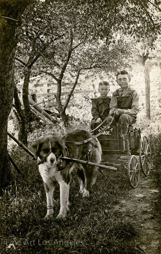 Photo of boys and dog cart, 1900. I definitely tried to do this with my dog.. Lol