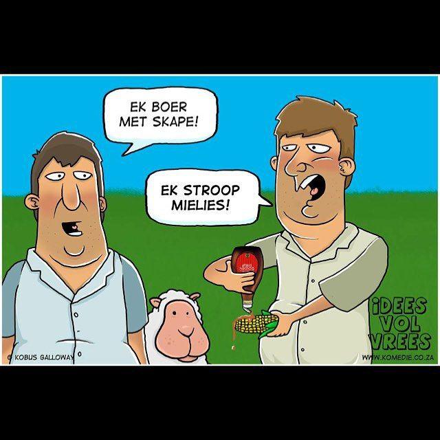 Boerdery snaaksie!  #skape #stroop #mielies #afrikaans #snaaks #IVV #lol #haha #lag