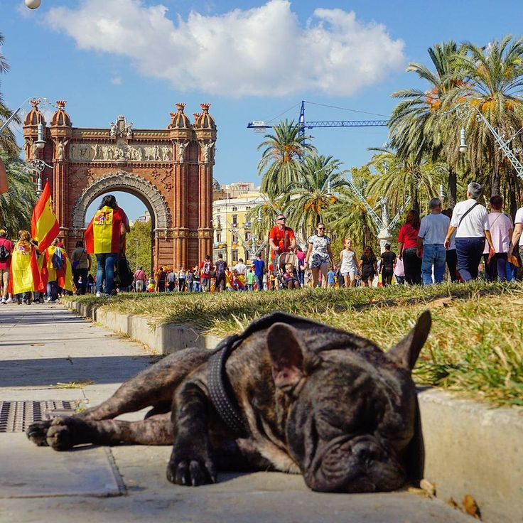 """269 Me gusta, 5 comentarios - Barcelona info❤ (@barcelona_information_site) en Instagram: """"Today there was a massive pro-unity demonstration in Barcelona, but in the end even the dogs get…"""""""