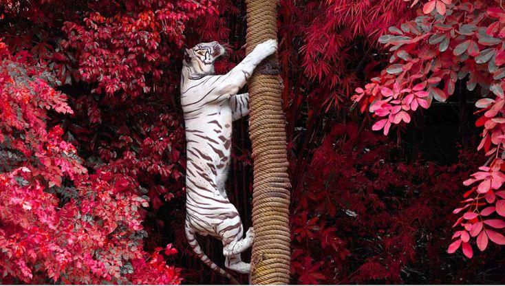 No Mundo Selvagem: 13 imagens de natureza magníficas — Shutterstock Blog Brasil