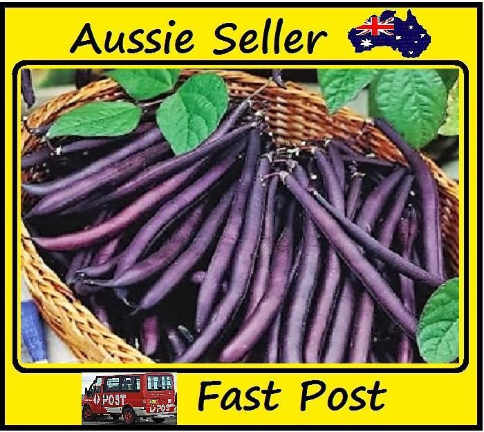 Imported Purple Bean Seeds Very Healthy Vegetable Easy Grow In Your Home Garden