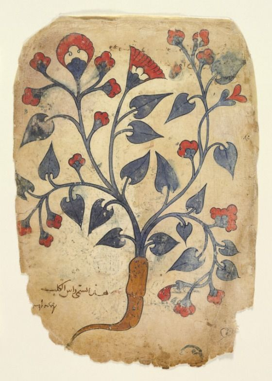 from an Arabic translation of the Materia medica by Dioscorides 13th century
