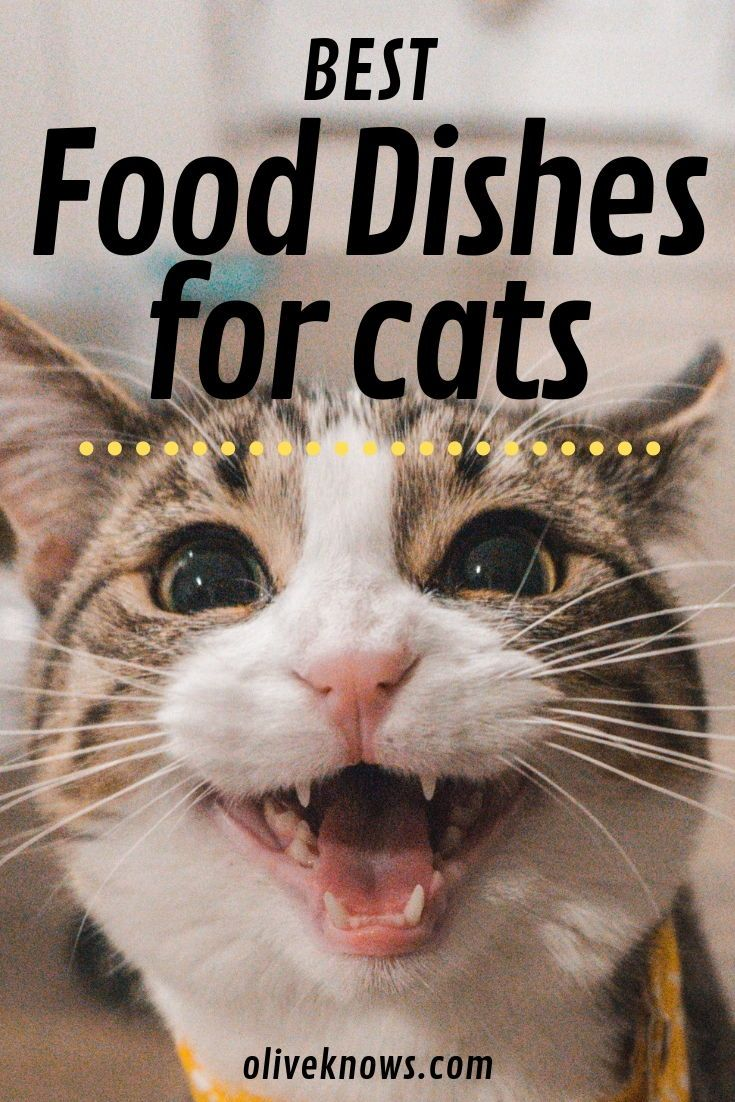 Best Food And Water Dishes For Cats Cats Cat Health Cat Insurance