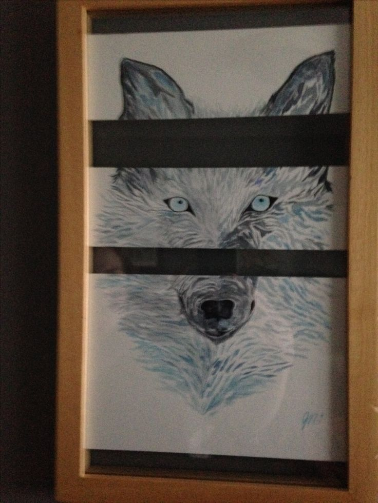 Wolf split. Watercolour