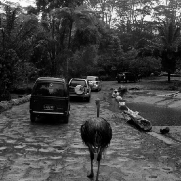 Taman Safari, Bogor, 2009