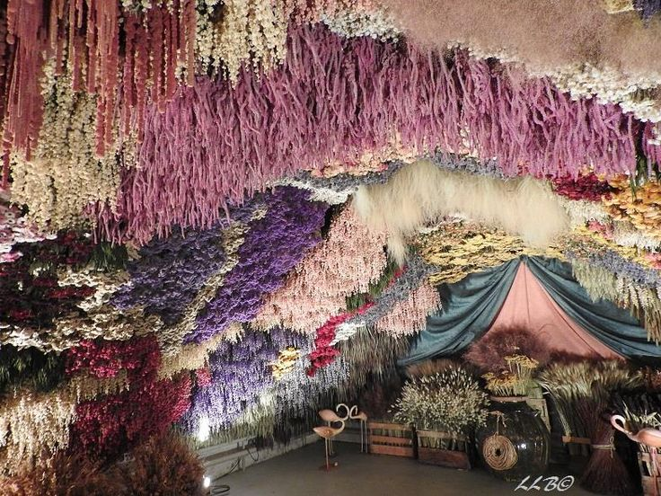 Step inside an Ali Baba's Cave of Dried Flowers Dried