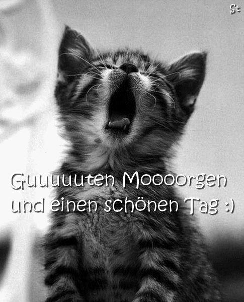 Pin von Christel Schäfer auf Guten Morgen | Cats, Cute ...