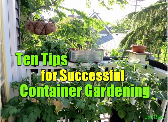 Ten Tips for Sucessful Container Gardening