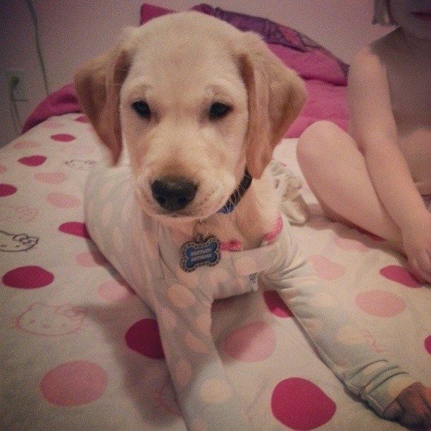 This sweet boy, who wants to dress and sleep in polka dots. | 21 Cats And Dogs Who Are So Ready For Bedtime
