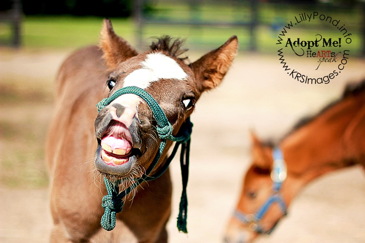 Thumper - a rescued nurse mare foal who needs a family to call his own...  For more information, please conact http://www.LillyPond.info (Dunkirk, MD)