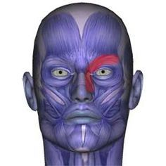 Orbicularis Oculi Muscle: Eye Pain and Twitching - The Wellness Digest