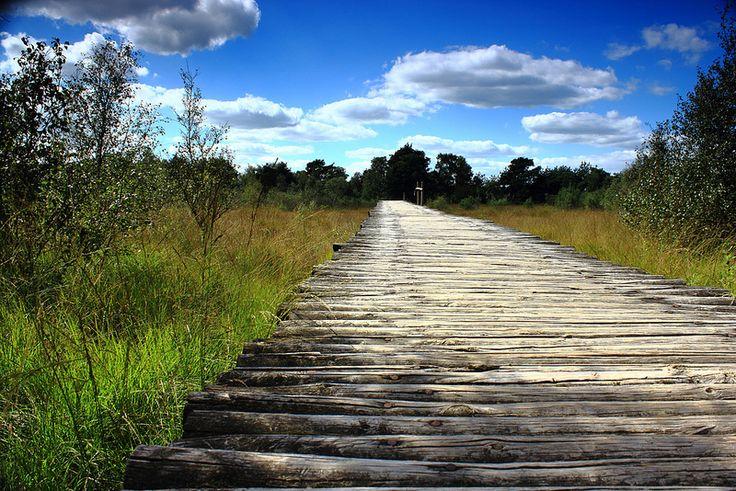 Nationaal Park de Groote Peel staat bekend om haar vele knuppelpaden.