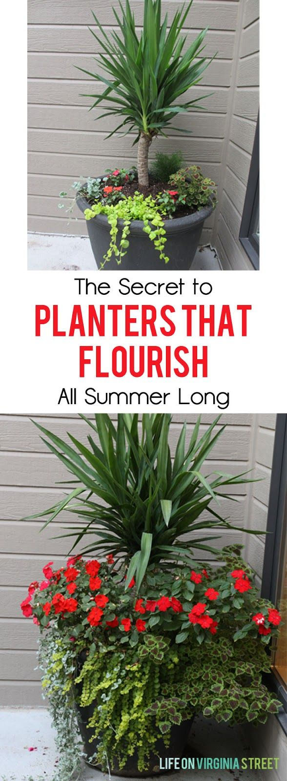 The secret to planters that flourish all summer long - definitely need to try this!