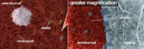 Genes and Blood Type - Learn Genetics, U of UT