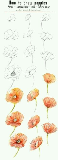 A beautiful variety of watercolor flowers with tutorials