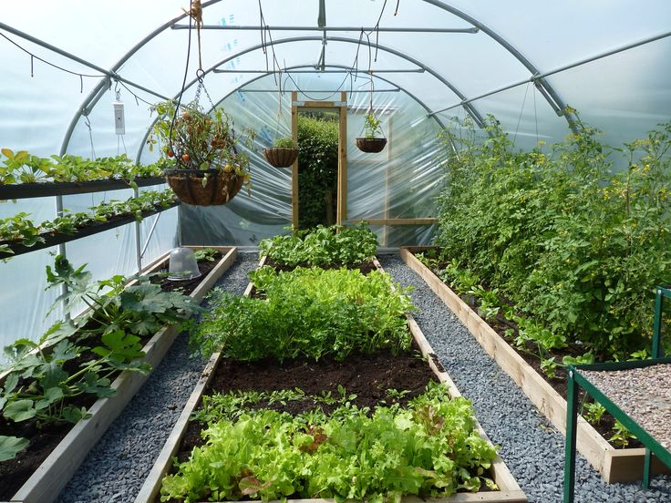 The polytunnel is producing all the fruit and veg we can eat! 2020