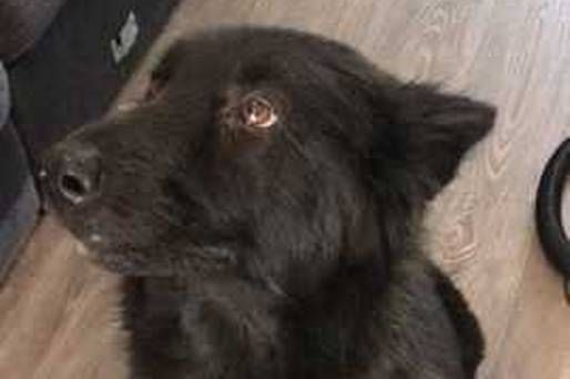 Much-loved dog reunited with family exactly one year after she went missing https://www.independent.ie/irish-news/news/muchloved-dog-reunited-with-family-exactly-one-year-after-she-went-missing-36623004.html