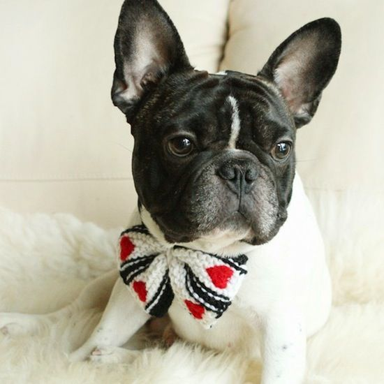 Robinson likes to dream of butterflies :)): Butterflies Necklaces, Toddlers Shoes, French Bulldogs, Dreams, Dogs Ii, Kid Shoes, Kids Shoes, Pets, Necklaces Accessories