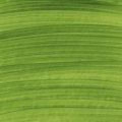 Pebeo Studio Akrilik Boya 60 Chrome Green Hue