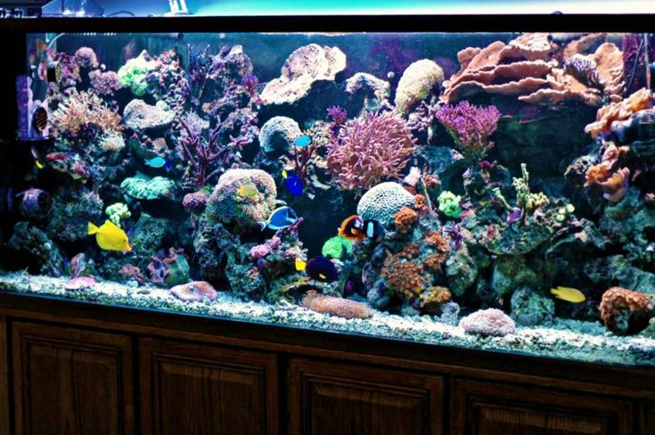 Saltwater reef and freshwater fish aquarium pictures