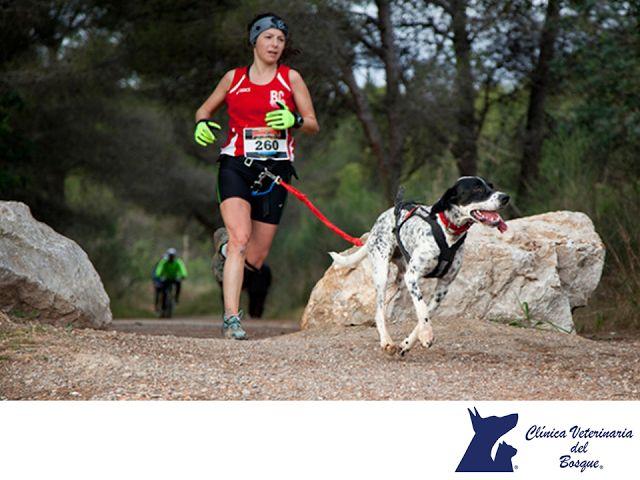 LA MEJOR CLÍNICA VETERINARIA DE MÉXICO. Para practicar canicross, los perros participantes deberán tener un año cumplido y record de salud en al día. El corredor llevará cinturón y correa. El Canicross no es otra cosa que correr acompañado de posiblemente uno de nuestros mejores amigos, nuestro perro. Existen diferencias entre las carreras de canicross del circuito oficial y las populares organizadas por asociaciones con fines benéficos. #veterinariadelbosque