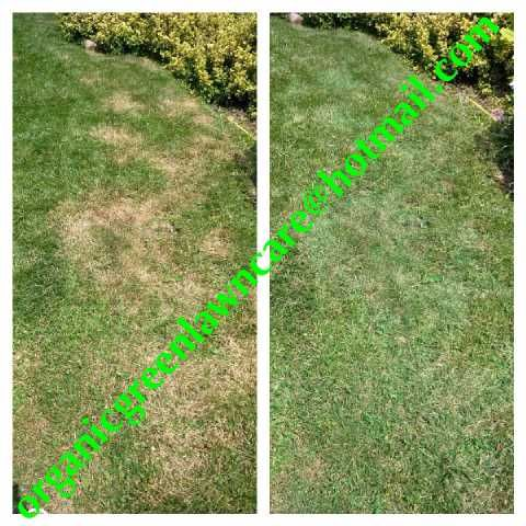 Instant Green Spray, we can turn your grass into nice green grass, same day service
