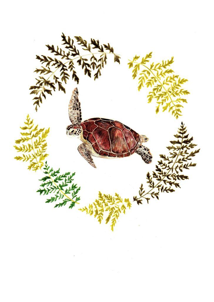 Tortuga verde. Serie flora y fauna chilena. Lápiz a color. Por Coco & Co
