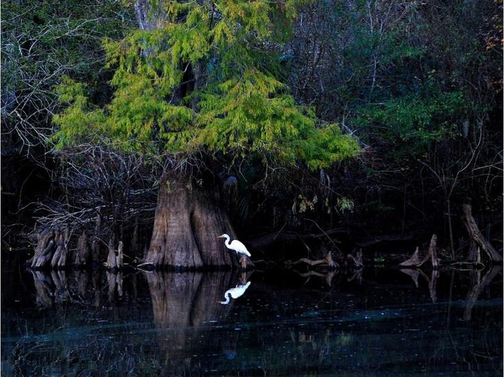 Garza, Florida Cortesía de Carol Kay