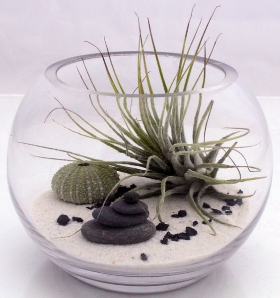Inspiration n°5 : un mini terrarium