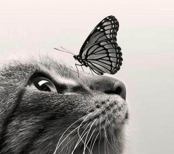 Bevorzugt Les 25 meilleures idées de la catégorie Dessin chat facile sur  EU63