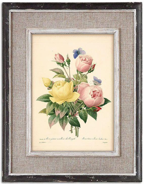 Elegant botanical print of Roses No.3. 8x12 by RoyalArtPrints