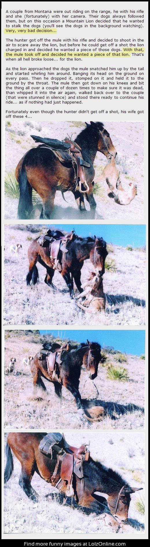 Badass mule. Wow!!!